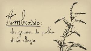 Ambroisie – des graines, du pollen et des allergies